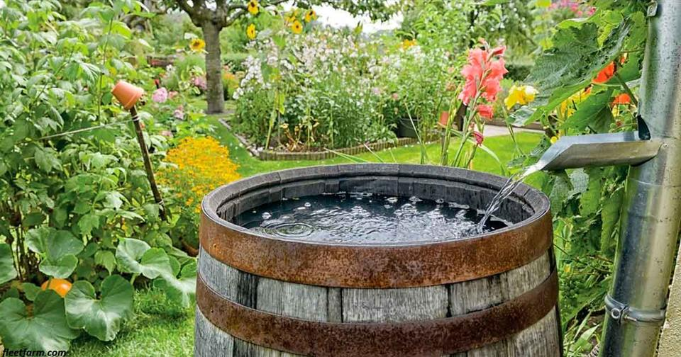 14 американских штатов, в которых незаконно собирать дождевую воду