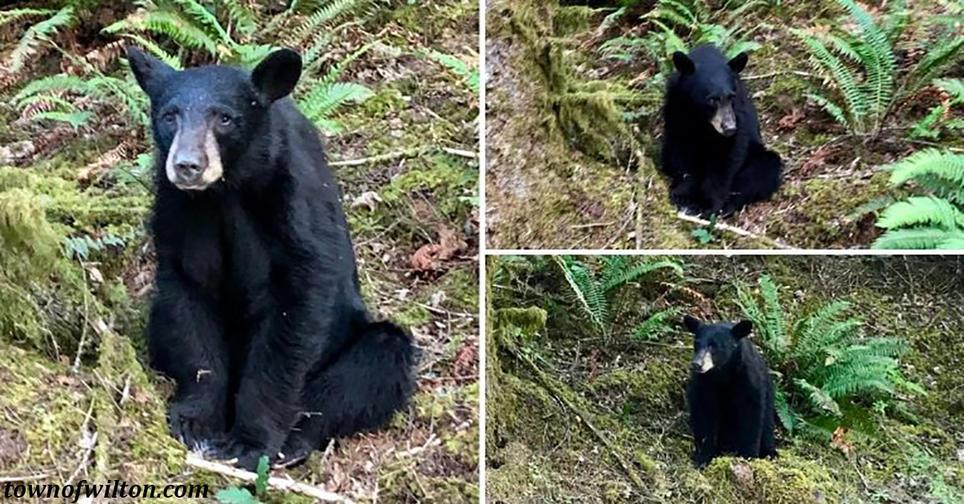 Работники заповедника застрелили медведя, которого перекормили туристы