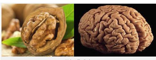 Божьи лекарства: 17 продуктов, похожих на органы, которые они берегут