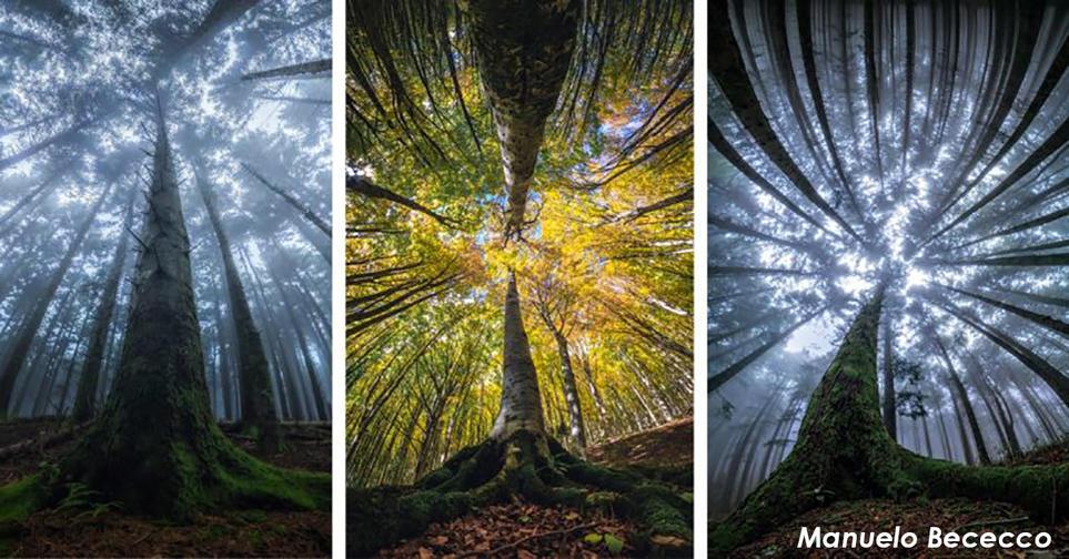 Итальянский фотограф запечатлел волшебную красоту леса снизу вверх