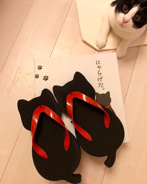 Эти кошачьи сандалии могли сделать только японцы. Вы только посмотрите...