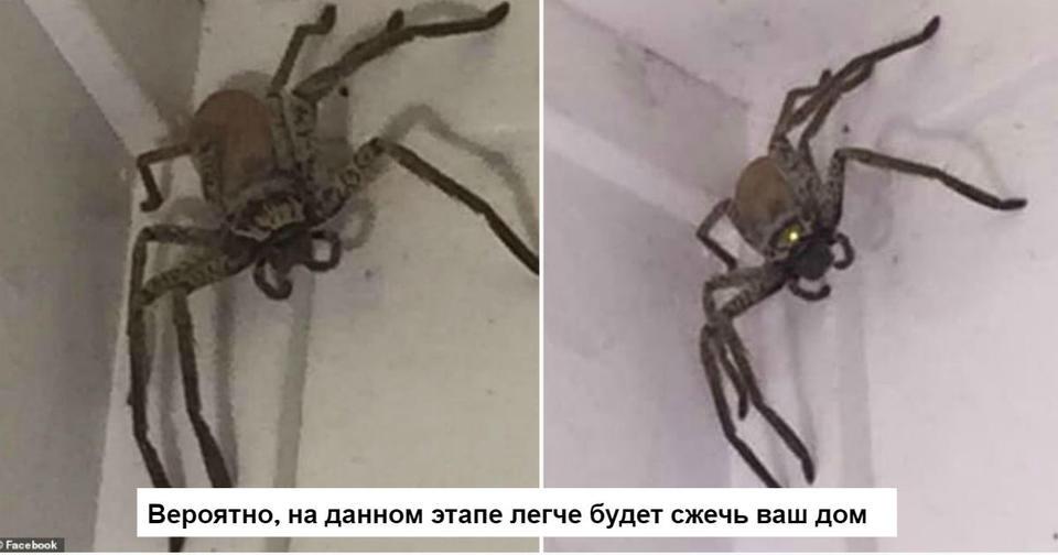 Австралийка спросила, что ей делать с этим пауком. Лучший совет   ″сжечь дом″