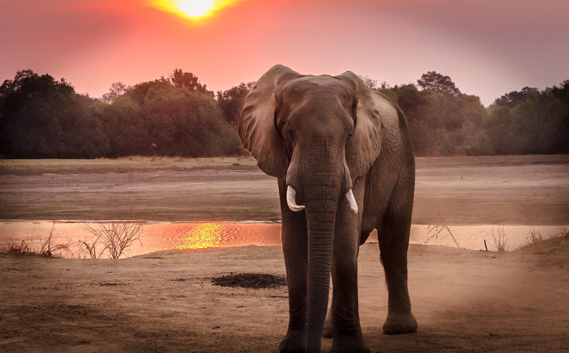 Туристов просят не кататься на слонах в Таиланде. Вот почему