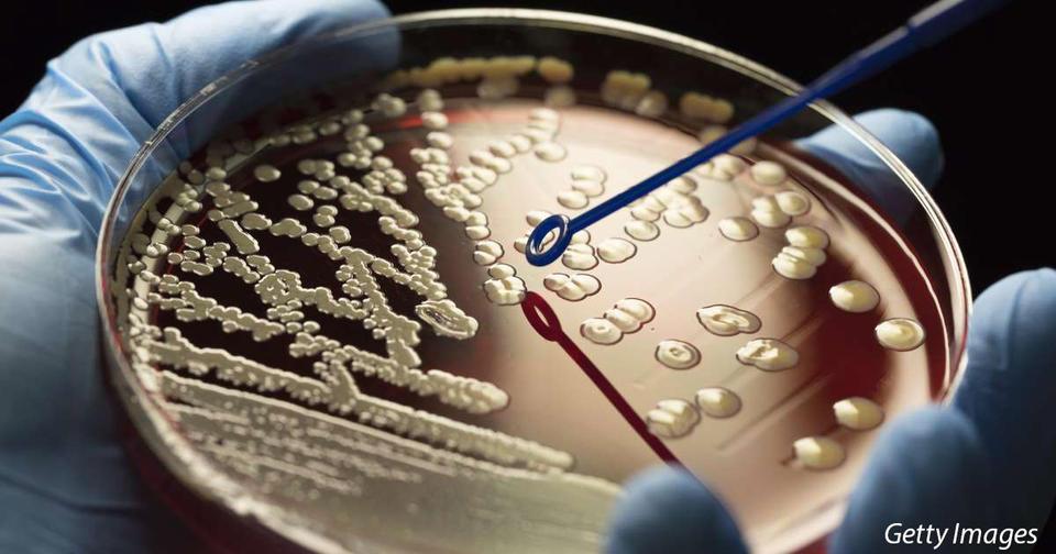 По миру распространяется ″супергрибок″, который не берут антибиотики. Он может убить нас всех!