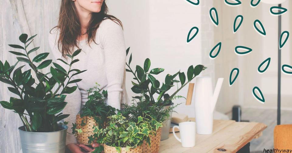 7 растений, которые очищают воздух лучше электрических приборов