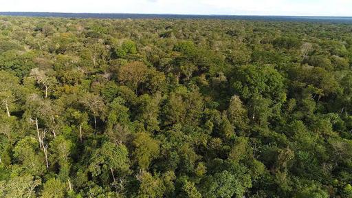 Ученые требуют высадить триллион деревьев, чтобы спасти Землю от глобального потепления