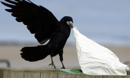 Во французском парке ворон научили собирать мусор. Взамен они получают еду