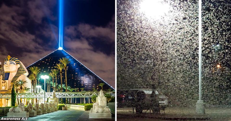 Лас Вегас наводнили миллионы кузнечиков — как в библейском пророчестве