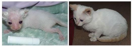 20 фото кошек до и после спасения: они точно растопят ваше сердце