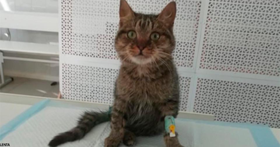 Дальнобойщик проехал 800 км, чтобы спасти раненого котенка