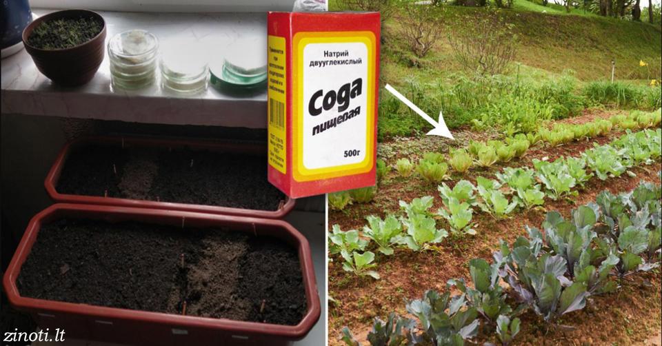 Если вы посадили овощи на даче, эти советы будут для вас бесценными!