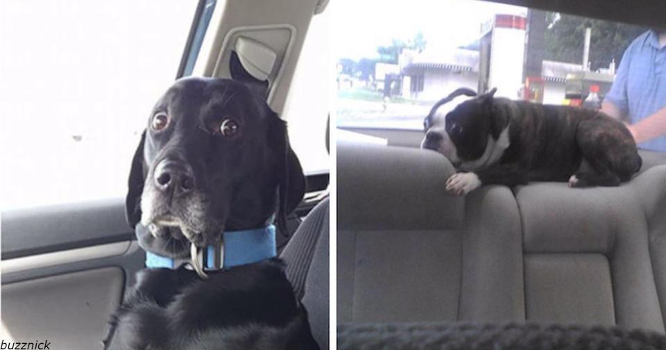 26 раз, когда домашние животные поняли, что их ведут к ветеринару, а не на прогулку