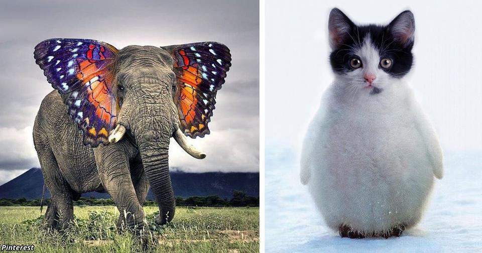 30 раз, когда животных превратили в странных гибридных существ