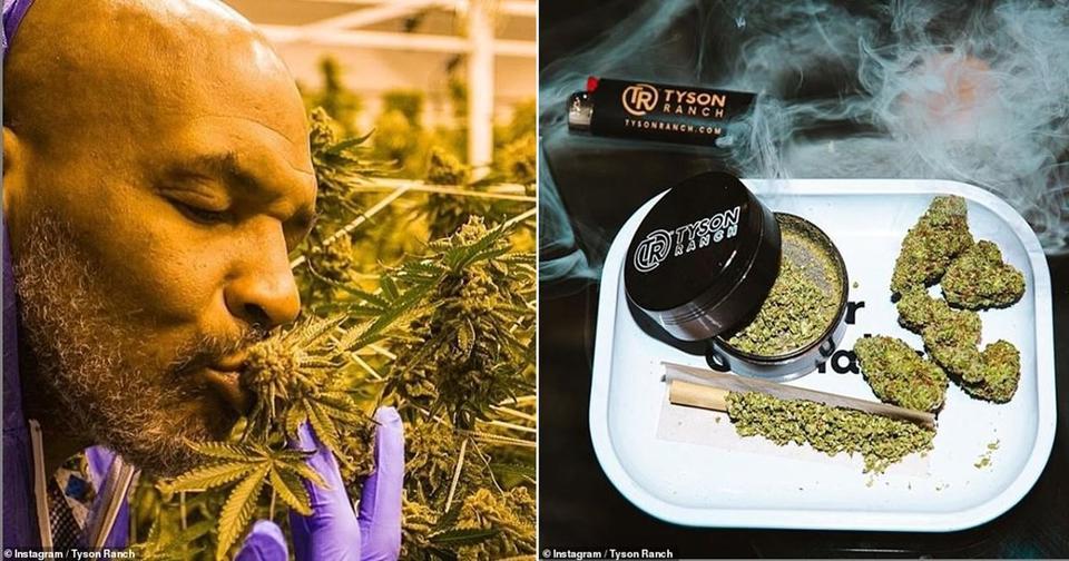Майк Тайсон рассказал, что курит на своем ранчо «травку» на  000 в месяц