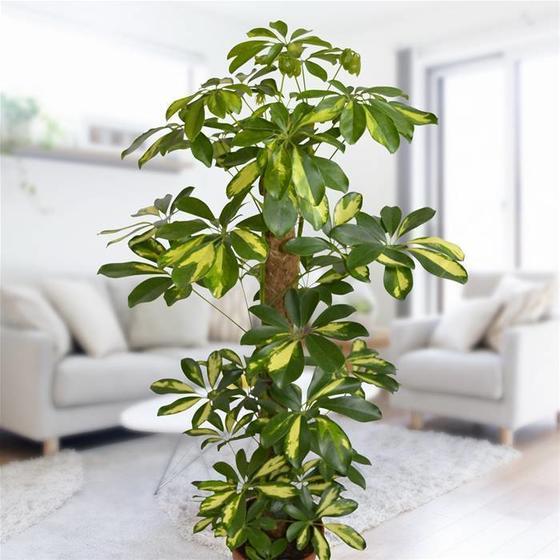 15 растений, которые не рекомендуется держать в своём доме