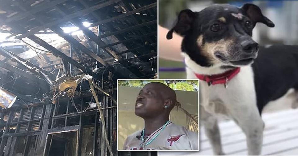 Собака спасла семью от пожара, пожертвовав своей жизнью