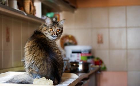 8 опасных вещей, которые вы каждый день делаете на кухне