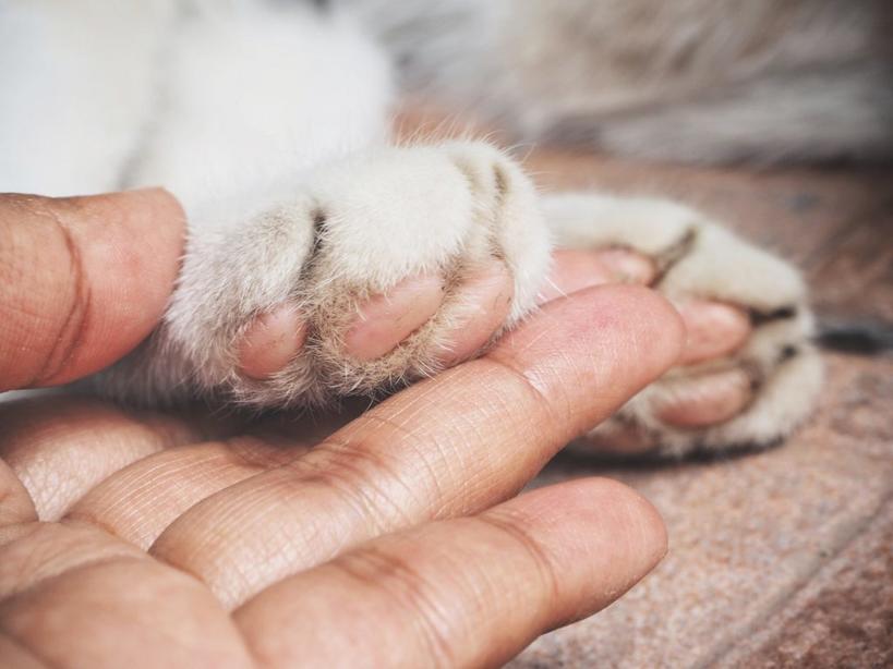 Ветеринар рассказал, какое последнее желание у животных перед смертью