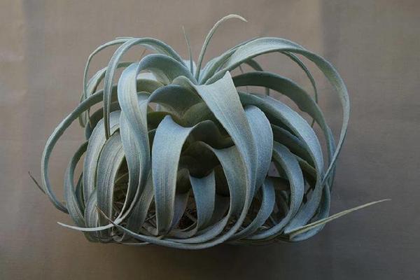 Какое комнатное растение лучше всего подходит разным знакам зодиака