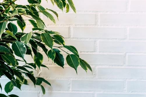 17 лучших комнатных растений для очистки воздуха по версии NASA