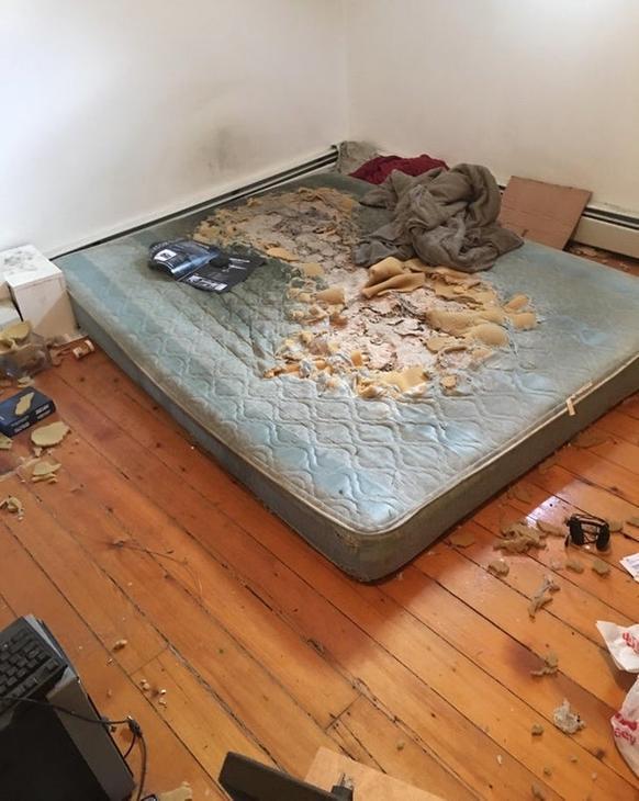 22 честных фото о том, каково этого - снимать квартиру на двоих с кем-то очень странным