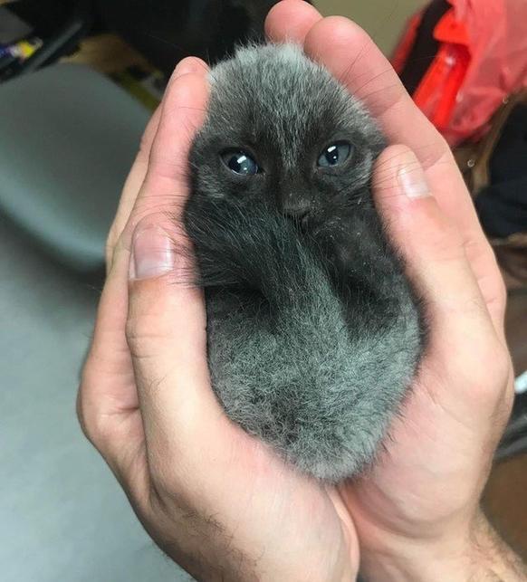 20 милых фото, после которых и вам захочется завести домашнее животное