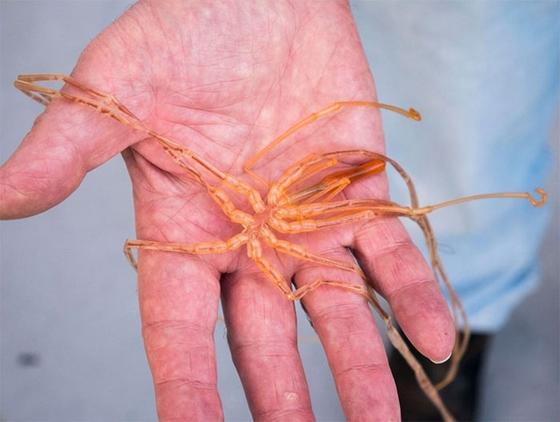Учёные поделились фотками чудовищ, которые живут на глубине свыше 5 километров