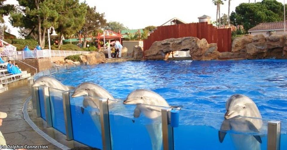 Индия признала дельфинов личностями — и запретила дельфинарии