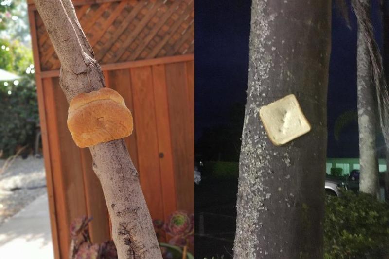 Зачем люди крепят хлеб к деревьям?  Вирусный  вопрос, который удивил соцсети