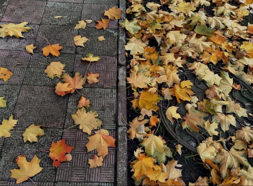 Моя соседка не сжигает опавшие листья, а делает из них интересные вещи: декор, удобрение и не только