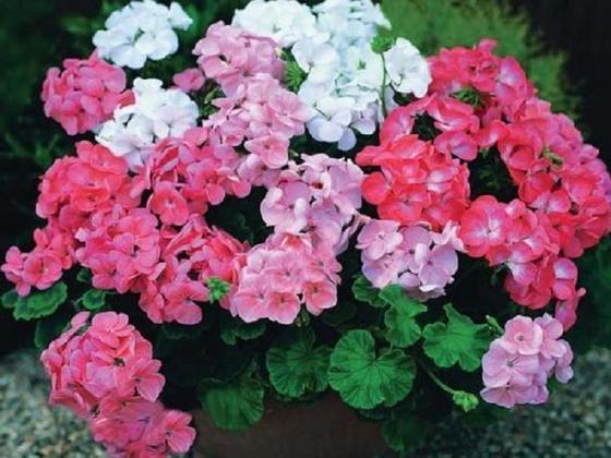 «Комнатные защитники»: растения, которые защитят ваш дом от вирусов и бактерий