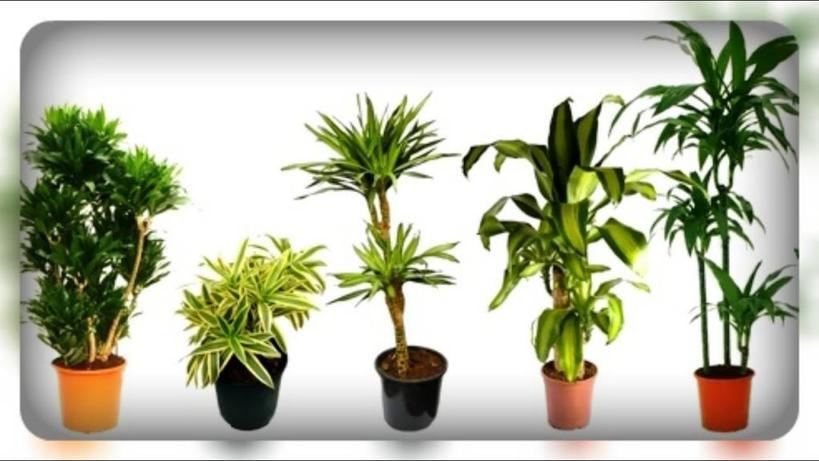 Комнатные растения осенью: меняем место нахождения горшка, и другие советы