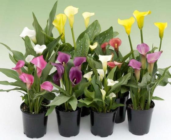 Растения, которые являются оберегами на все случаи жизни. Чтобы бизнес пошел вверх, бабушка посоветовала поставить в офис цветок кротон