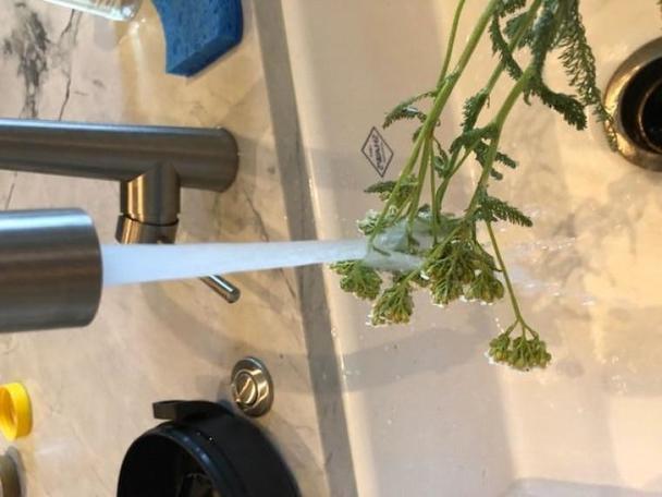 Я готовлю мазь из тысячелистника в домашних условиях: она хорошо регенерирует кожу и помогает от укусов насекомых