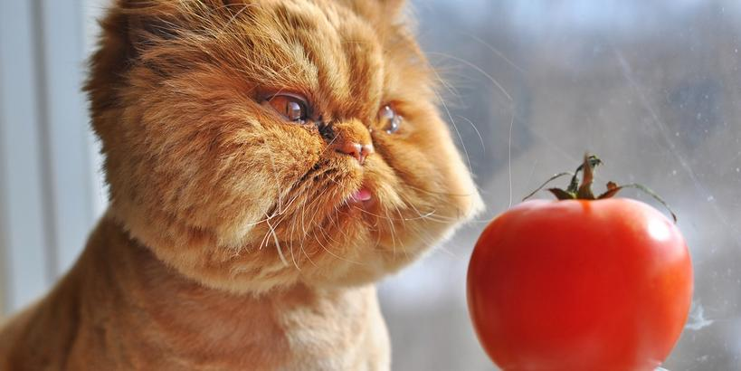 Унылые, мокрые и испуганные: 10 забавных котов, претендующих на звание «Кот года»