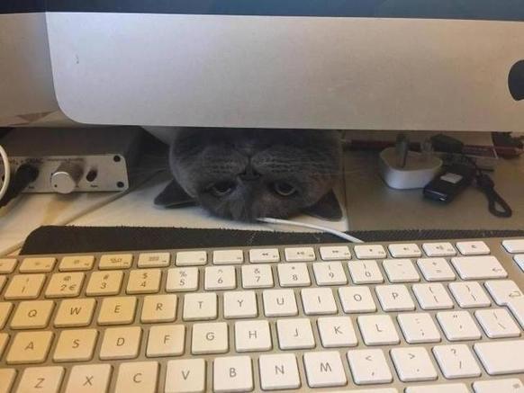 Коты-хулиганы, на которых очень сложно злиться. Фотоподборка, которая поднимет вам настроение