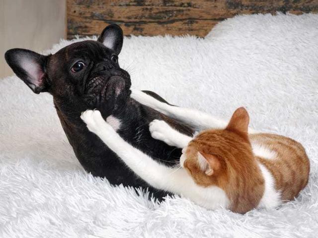 Щекотки, обнимашки, купание: кошки ненавидят эти вещи. Лучше не навязываться питомцу