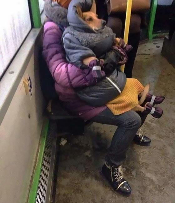 Кот на голове и собака в пуховике: кого только не встретишь в общественном транспорте