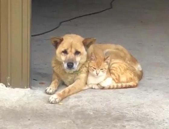 Гуру маскировки: как коты умудряются спрятаться у всех на виду (фото)
