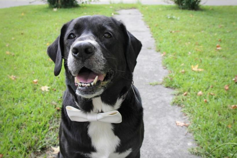 Милый галстук бабочка для собаки своими руками: порадуйте питомца стильным украшением