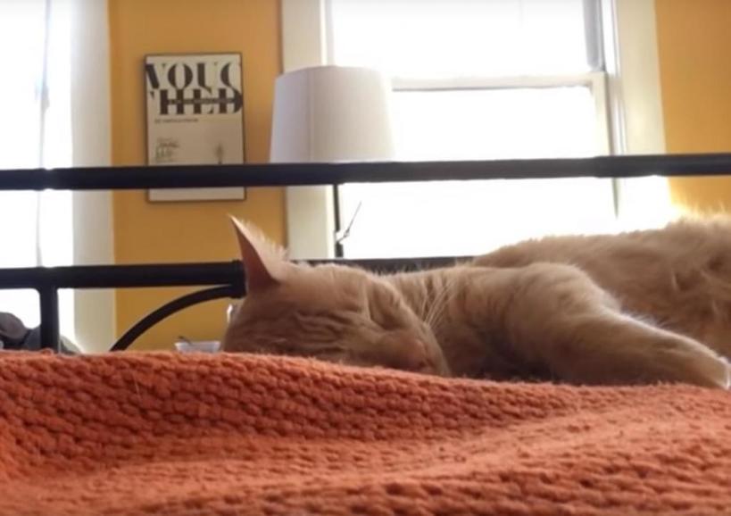 Кот каждое утро будил хозяина в 4 утра. Однажды терпению мужчины пришел конец, и он решил отомстить (видео)