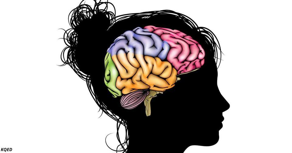 Мама так описала мозг своего сына подростка, что это надо знать всем родителям