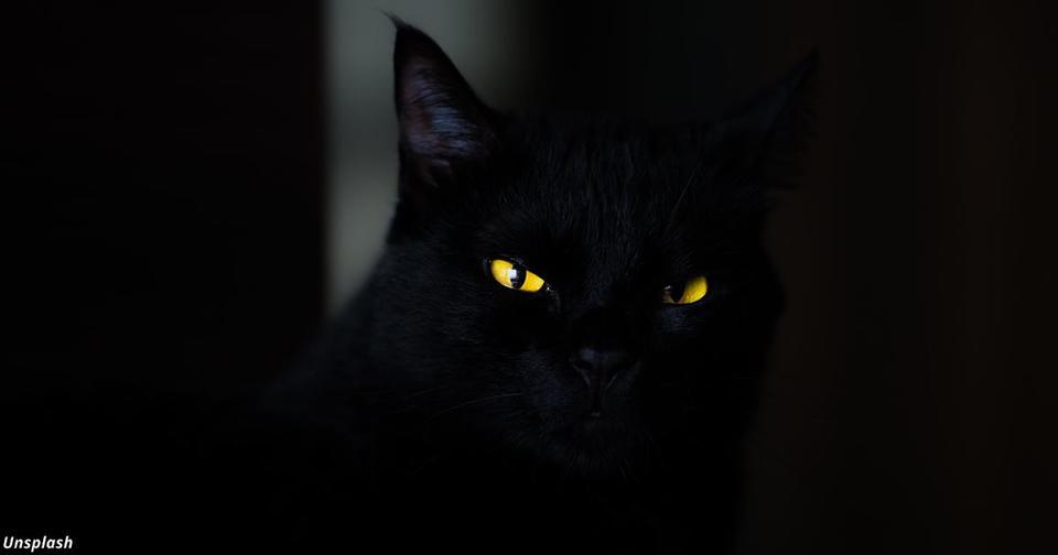Что будет делать ваш кот, если вы умрёте?