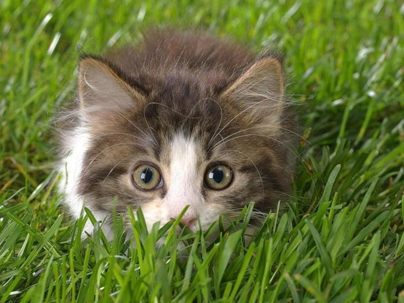 Взяла пример со своей кошки, и жизнь сразу наладилась: капризничаю, играю и сладко сплю