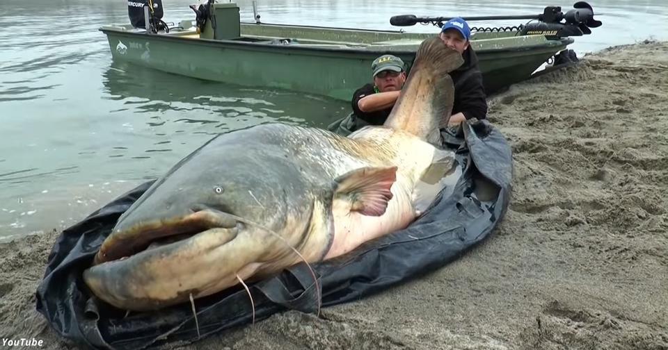 Мужик поймал в озере сома длиной в 2 метра 74 сантиметра