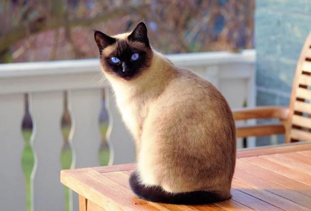 Кошка Михаила потерялась. Она вернулась домой с невестой для своего хозяина