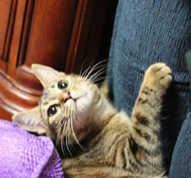 Кот дерет диван? Действенный способ обновить обивку: мебель выглядит как новенькая