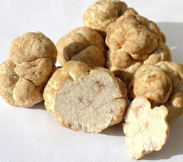 Самые дорогие грибы в мире, цены на них просто шокирующие
