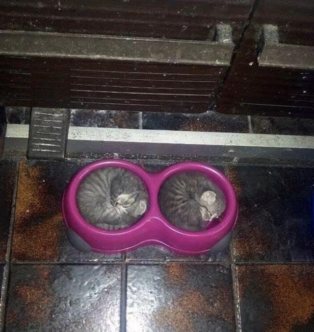 17 кошек, которые доказали, что этих животных не остановить