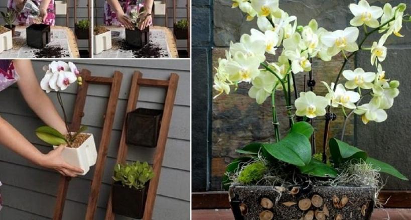 Красиво и по современному. Подруга флорист подсказала интересную идею по выращиванию орхидей